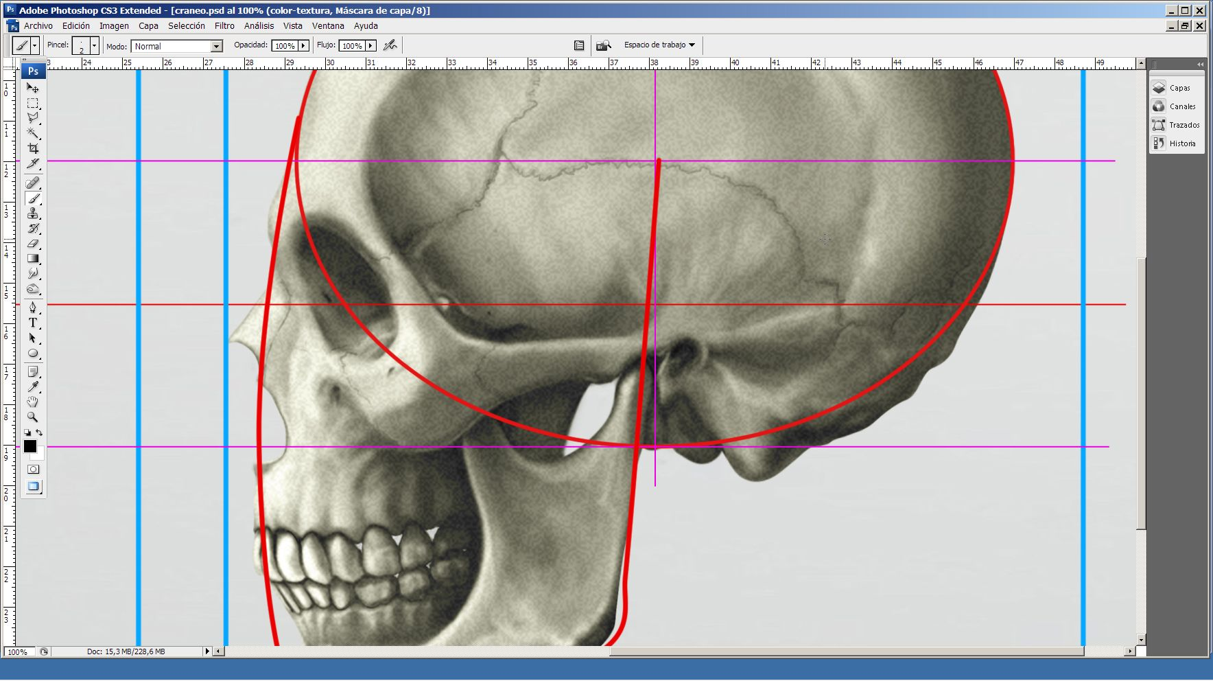 Dorable Anatomía De Referencia Para El Artista Festooning - Anatomía ...