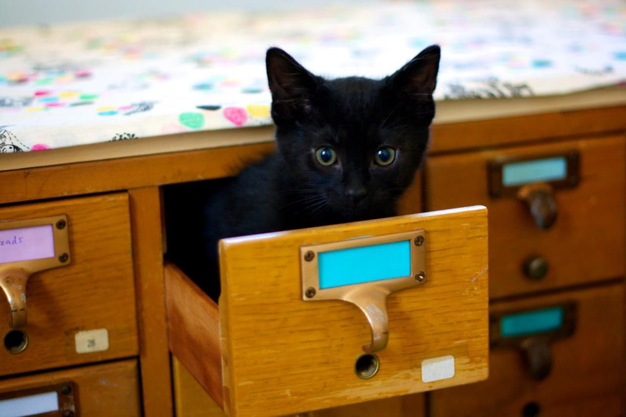 STUDY: Cats Not as Effective as Index Cards at Organizing Books