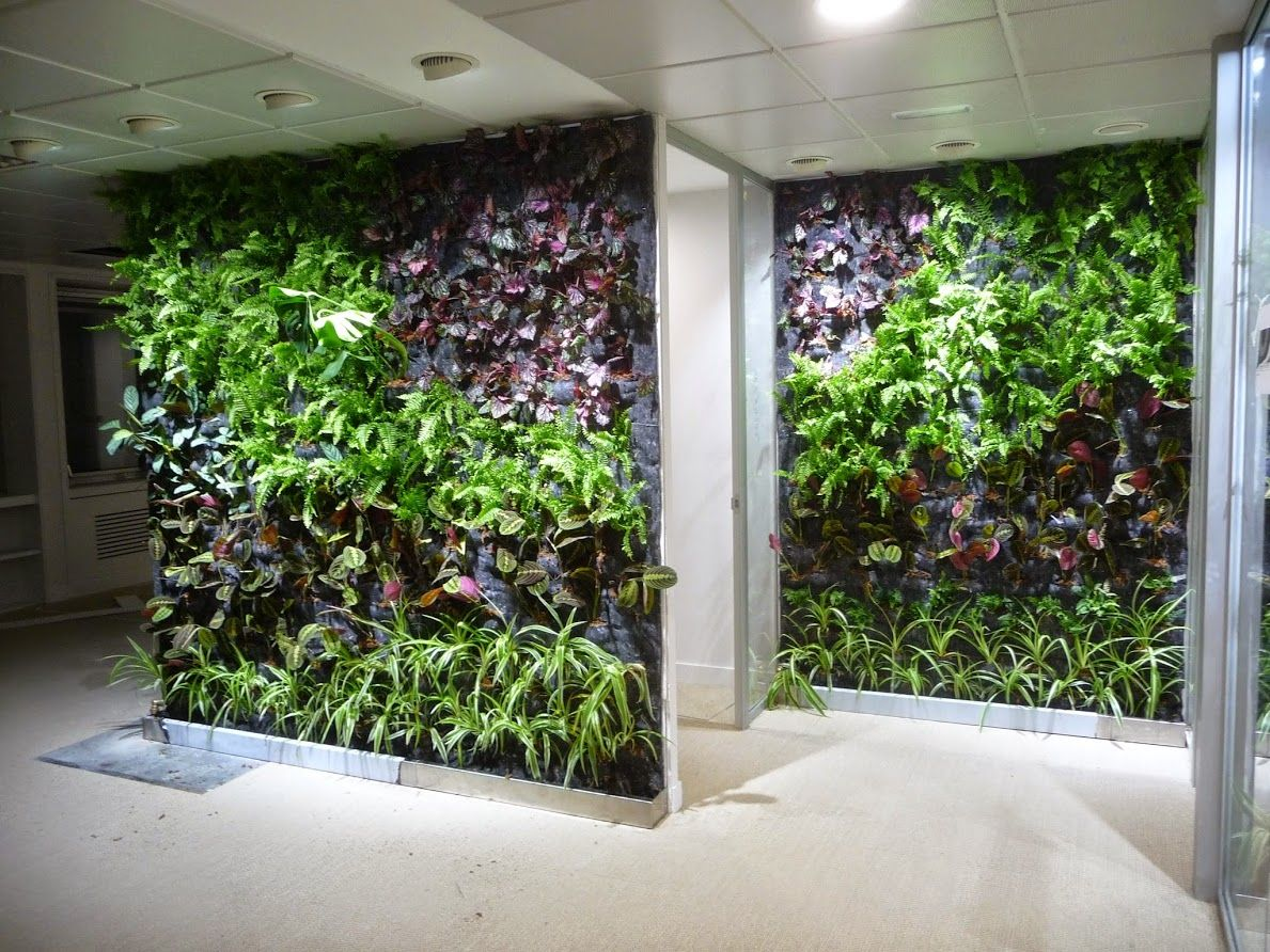 Jard nes verticales de interior en oficinas de madrid for Plantas usadas para jardines verticales