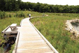 Wooden Path at lake