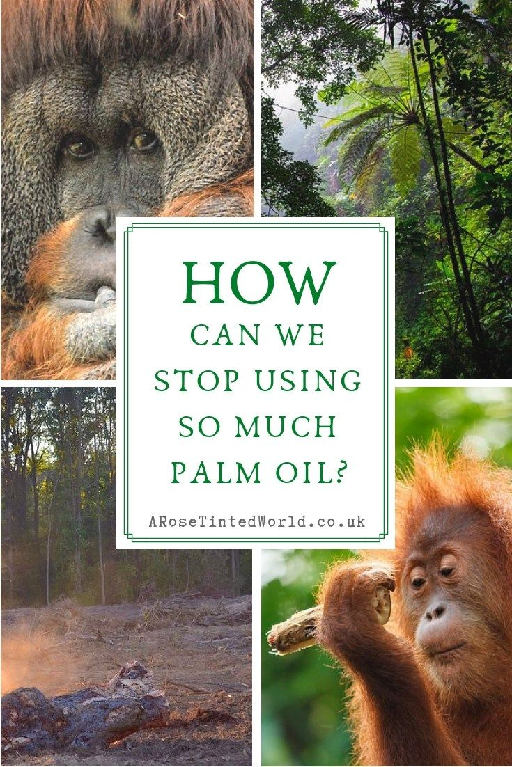 How can we stop using so much palm oil palm oil free