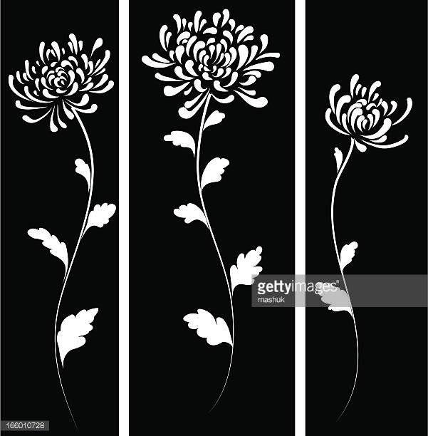 Chrysanthemum Vector Art And Graphics Getty Images Chrysanthemum Tattoo Chrysanthemum Drawing Chrysanthemum