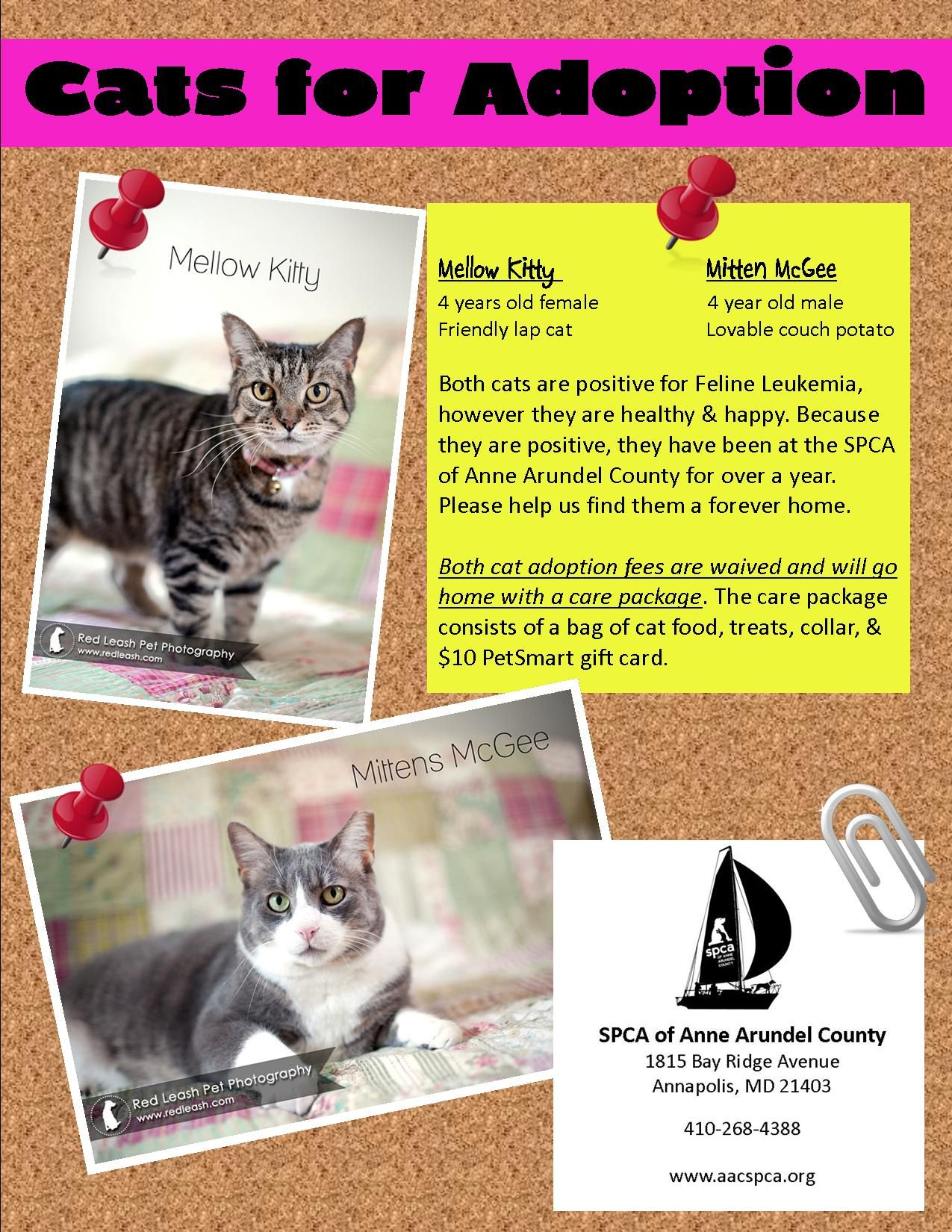 SPCA of Anne Arundel County Maryland poster for two feline
