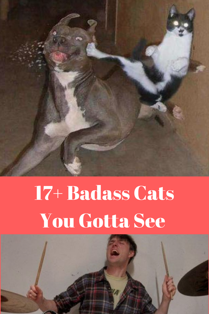 17 Badass Cats That You Will Love Cat Kittens Pets Animals Cute Funny Paw Memes Photo Catfood Kit Kittens Funny Kittens Cutest Funny Looking Cats