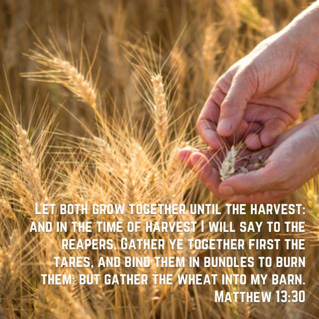 Matthew 13:30 KJV   Matthew 13, King james version, Matthews