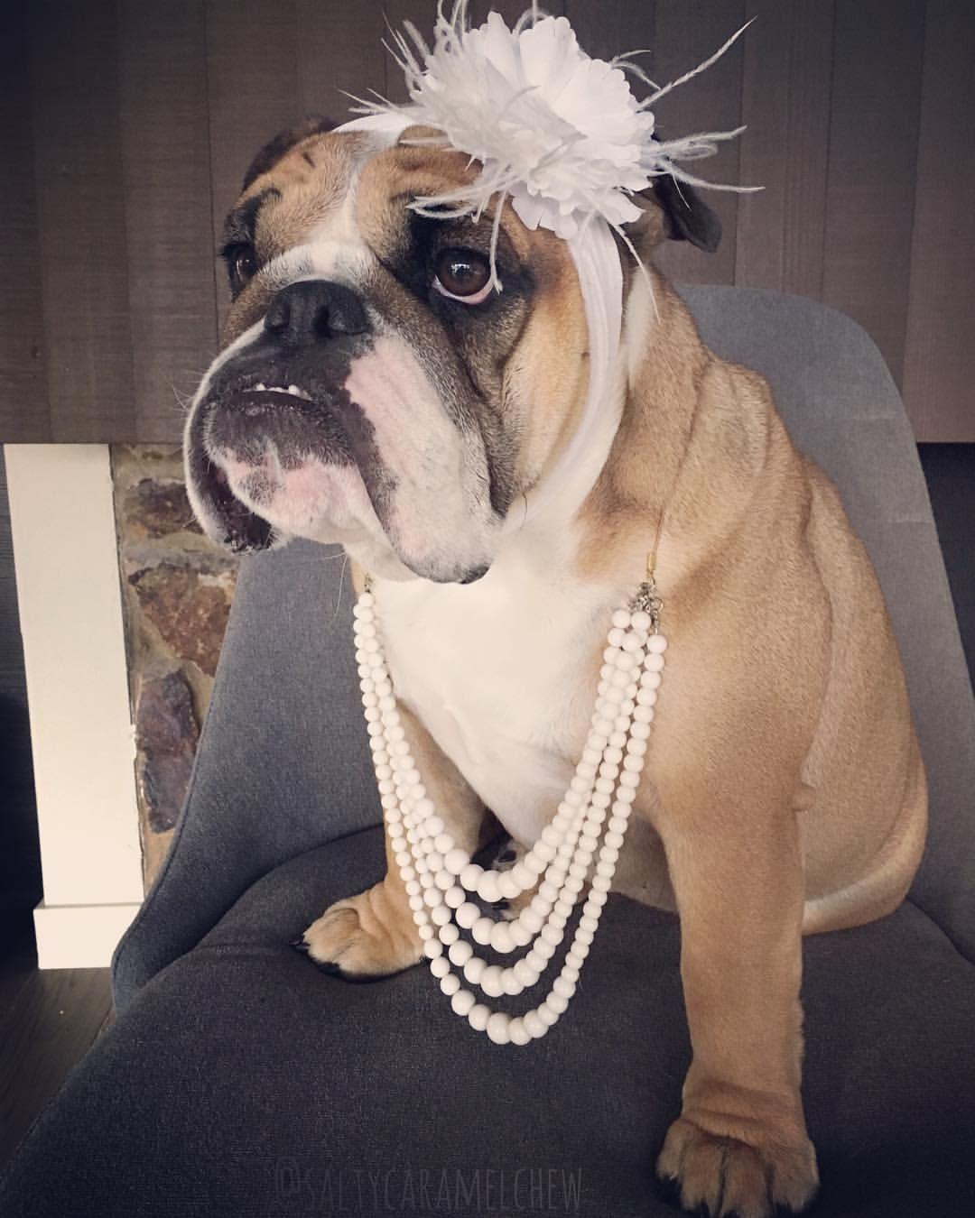 Image By Katrine Mac On Bulldogs Are Bully Bulldog Funny