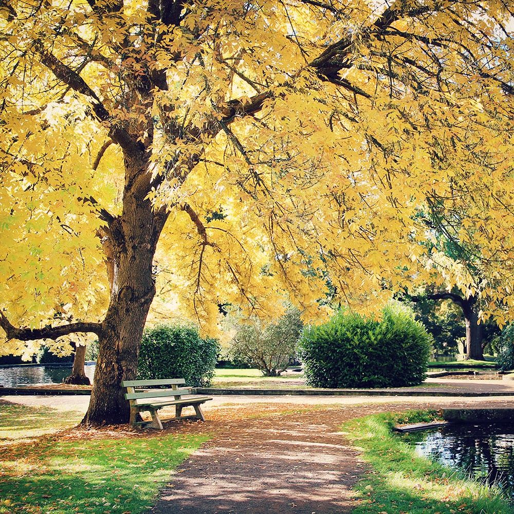 Autumn colours in New Norfolk, Tasmania / A Globe Well Travelled