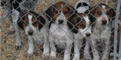 Demand Dan Brown Be Prosecuted for Executing 26 Dogs and Cats