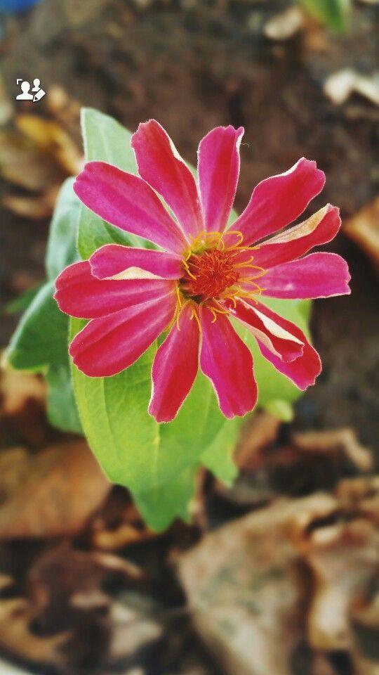#flower #pink