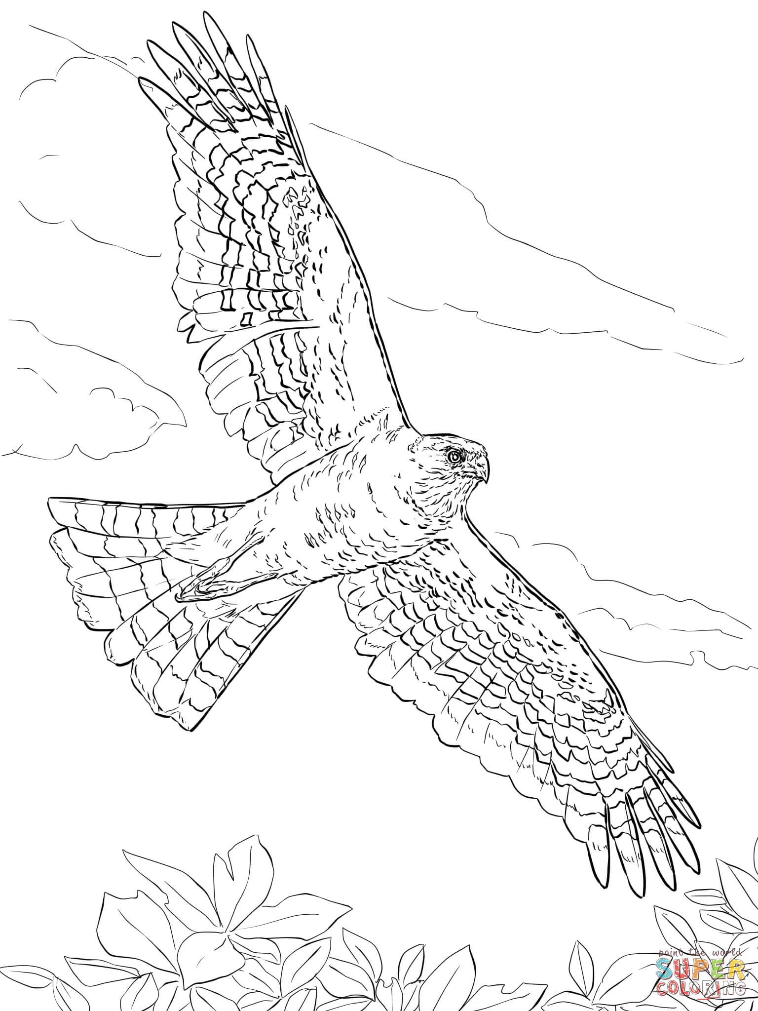 Sharp Shinned Hawk Coloring Page Free Printable Coloring Pages