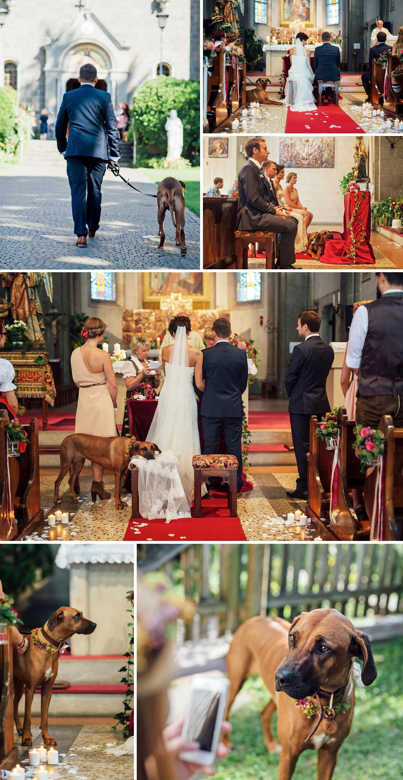 Hund zur Hochzeit | Bridezilla, Wedding and Weddings