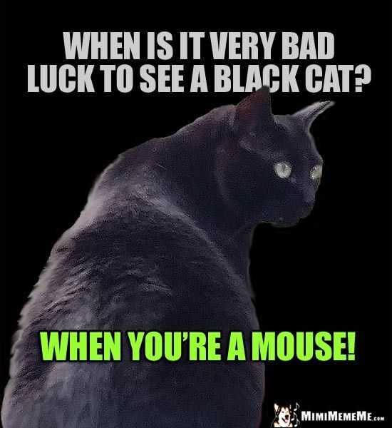 Black Cat Joke When Is It Very Bad Luck To See A Black Cat When You Re A Mouse Dog Jokes Cat Jokes Cat Puns