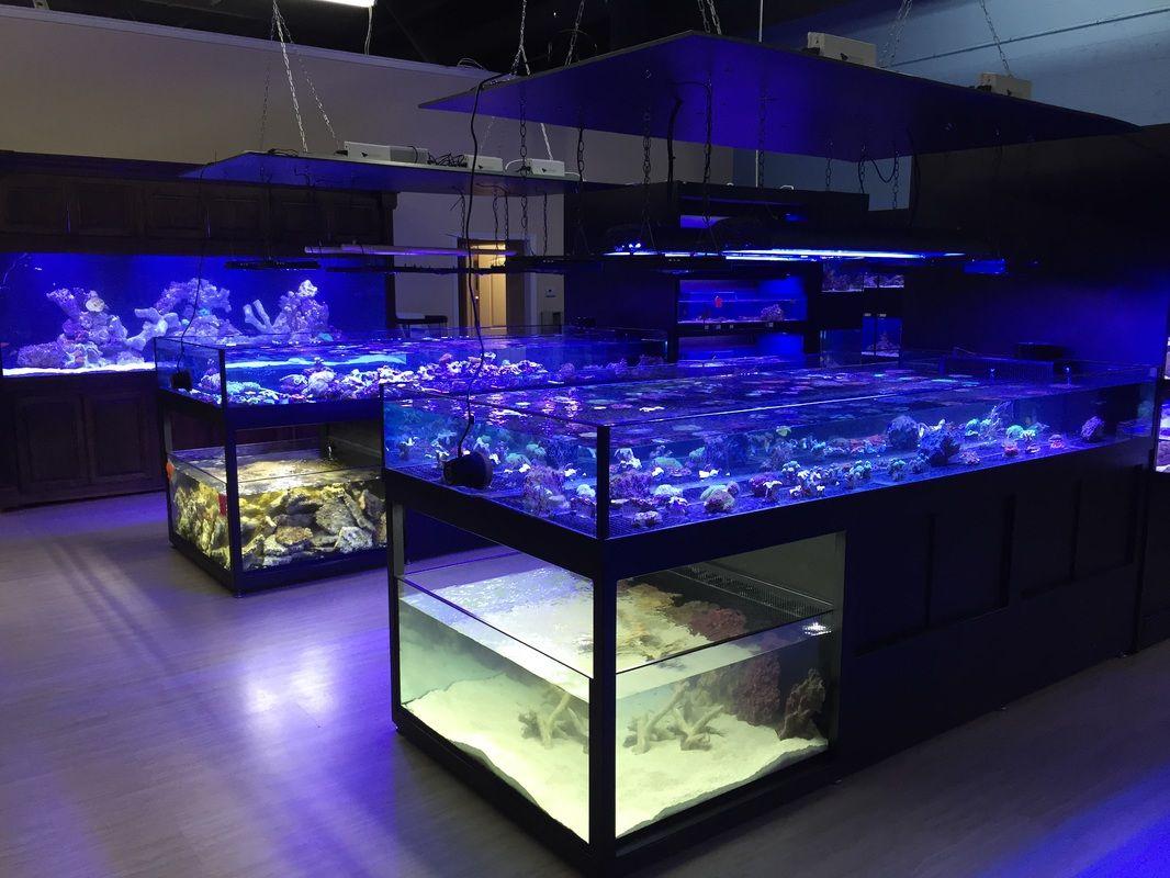 Picture Aquarium Store Aquarium Reef Store