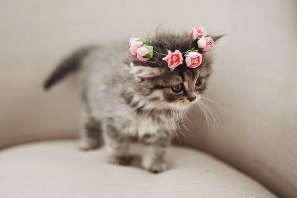 Flower Crown For A Pretty Kitty 1st November 2017 Cute Baby Animals Cute Animals Kittens Cutest