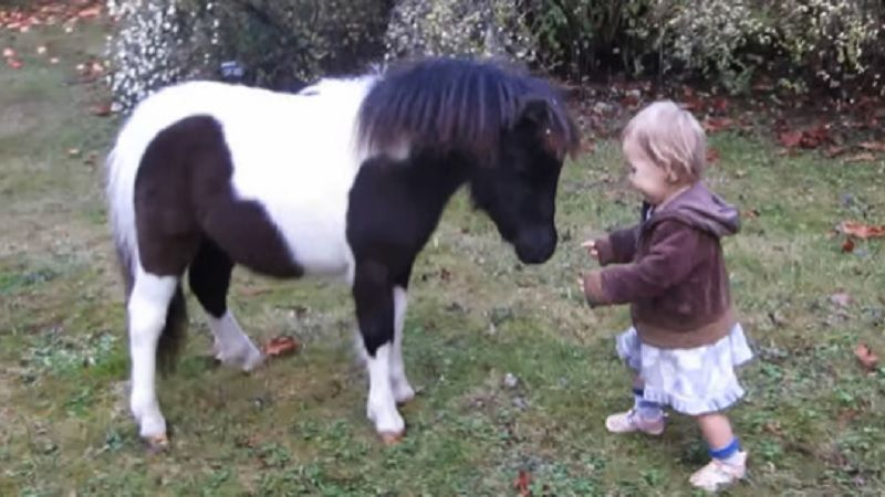 Toddler Walks Up To A Tiny Pony What Happens Next Truly Special Video Tiny Horses Mini Horse Baby Horses