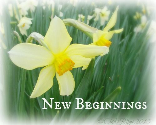 Florals Family Faith March Flower Of The Month Waiting For The Daffodil And New Beginnings March Birth Flowers Birth Month Flowers Daffodils