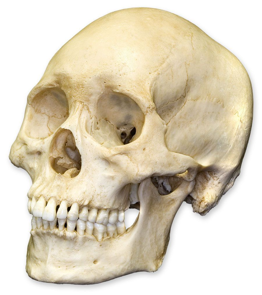 Human skull. Back in the days some people put a human skull on their ...
