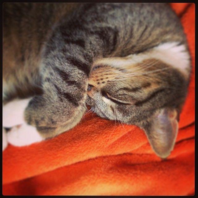 Minki sleeping
