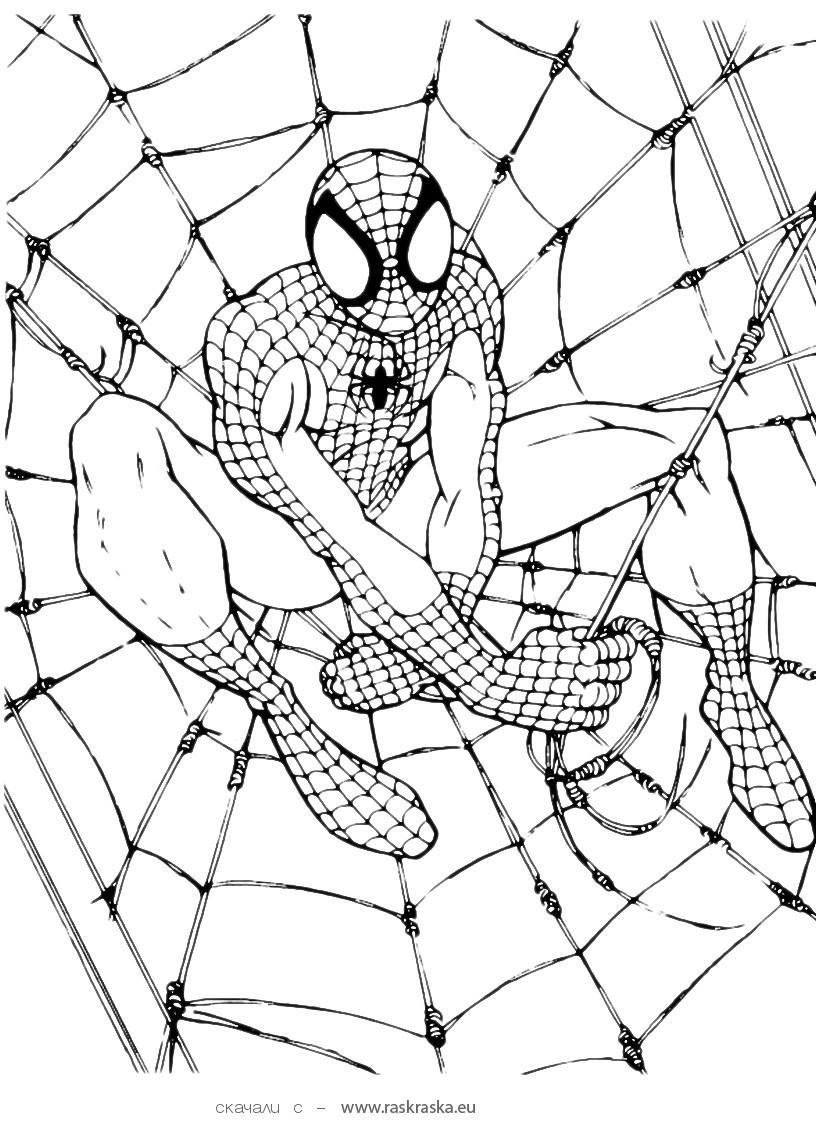 ColoringPageSpidermanjpg 8161123 dessin a colorier 12
