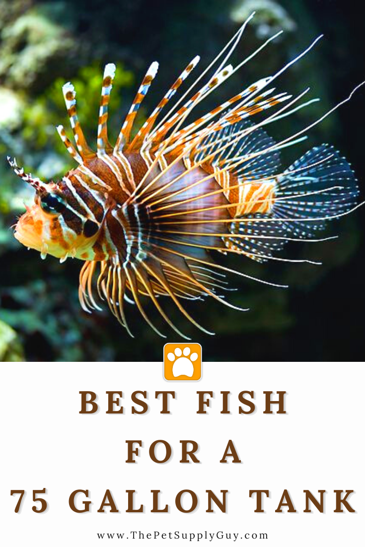 Best Saltwater Fish for 75 Gallon Tank 🐠 The Pet Supply ...