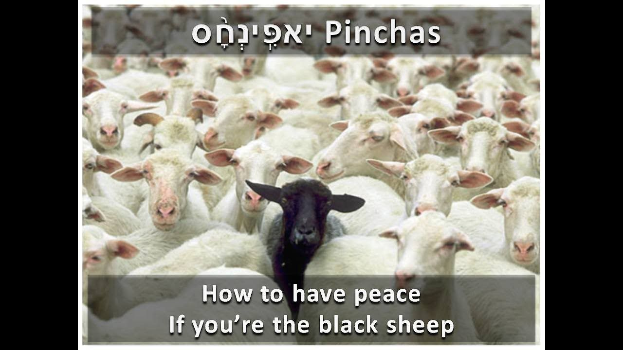 How can i have peace if i'm the black sheep in my family  - Torah Portio...