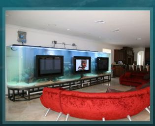 Acrylic Tank Manufacturing Of Las Vegas, Nevada | Home Of The Hit TV Show  TANKED Amazing Ideas