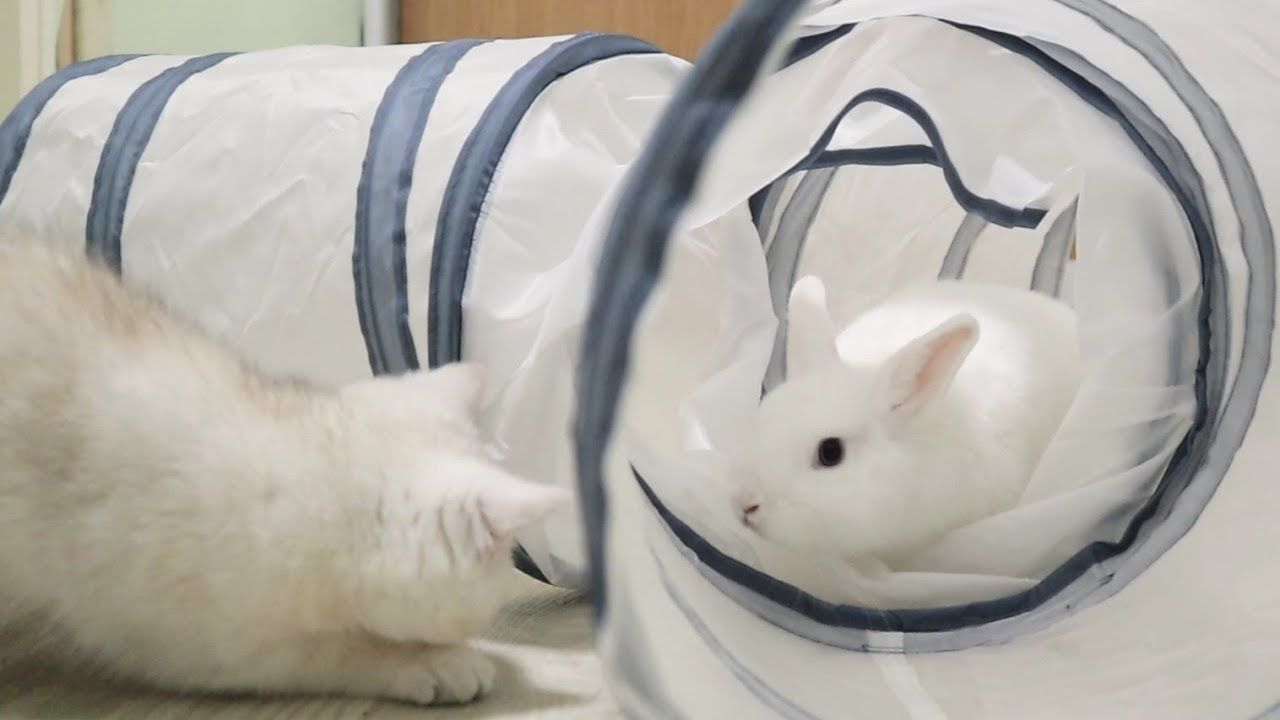 Baby Bunny Neytiri Plays In The Maze With His Friends Cats And Kitten Coco 14funnybunnyvideos Adorable In 2020 Cats And Kittens Baby Bunnies Cute Baby Bunnies