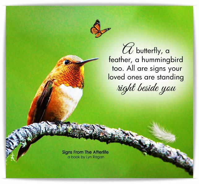 A Erfly Feather Hummingbird Are All Symbols That Our Loved One Is Right Beside Us