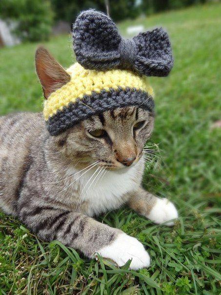 gorros a crochet para gatos - Buscar con Google | Pets - Accessories ...