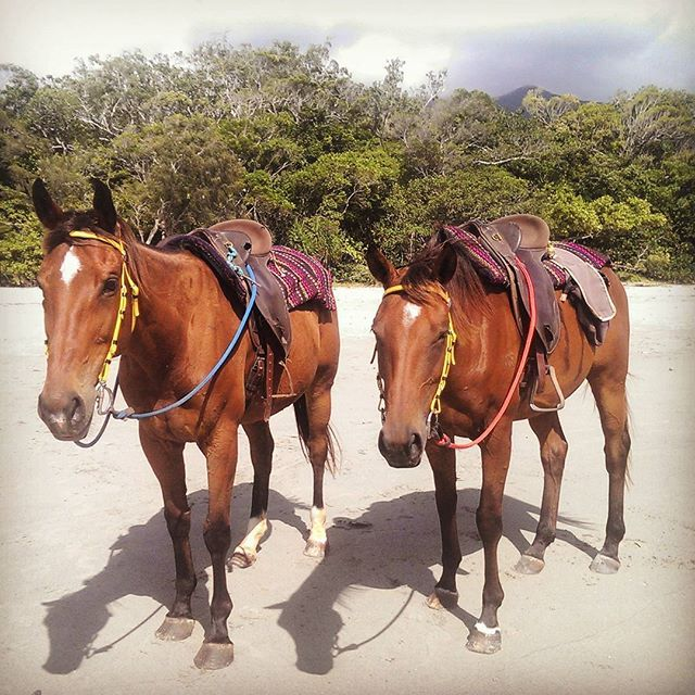 Instagram media by jemmashelton - Twinnies #twins #cute #pretty #horses #beach #equestrian #capetrib #horseride #work #daintree #australia #love @capetribhorserides