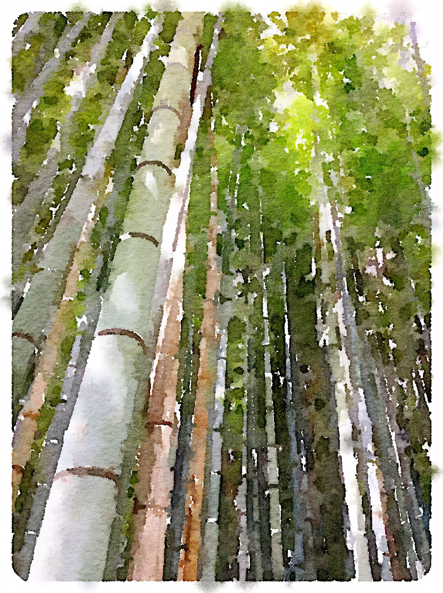 Bamboo Forest Near Kyoto Landscape Watercolour Inspiration
