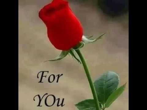 اغنية محمد نبينا بصوت طفل رائع Beautiful Rose Flowers Red Roses Wallpaper Rose