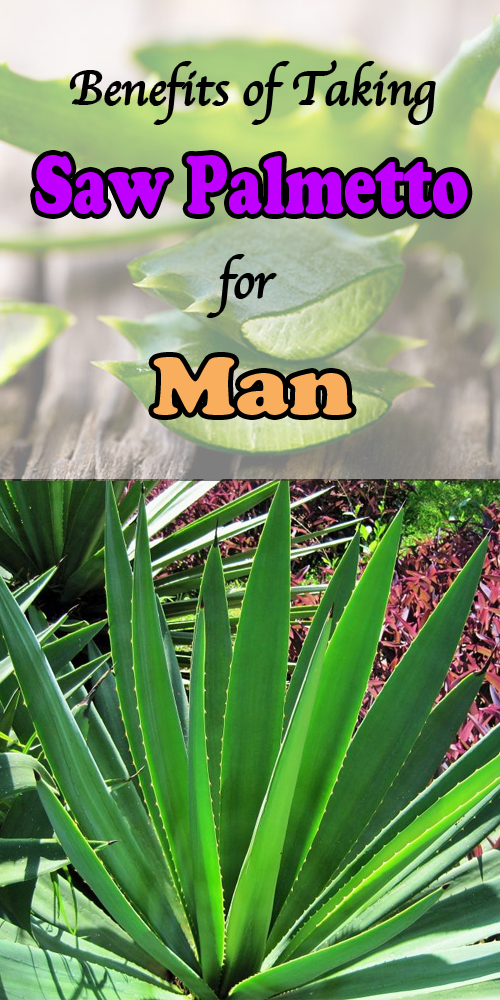 Benefits of Taking Saw Palmetto for Men