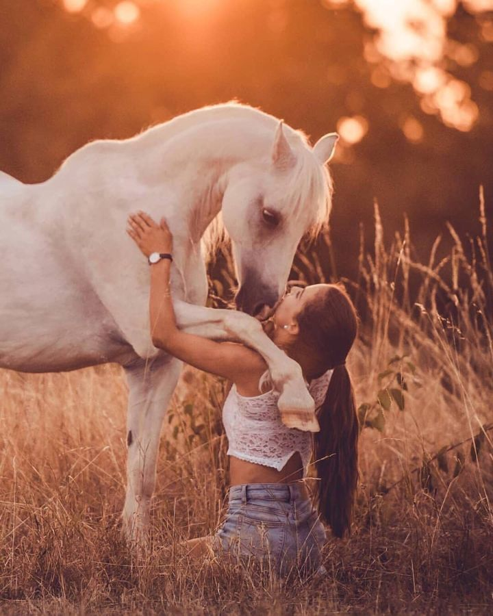 32 Stunning Phone Wallpaper For People And Animals Page 17 Of 32 Veguci Cute Horse Pictures Horses Pretty Horses
