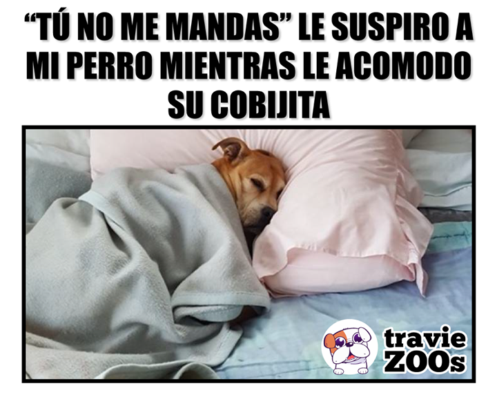 Y Segun Yo Estoy Libre De Responsabilidades Porque No Tengo Hijos Perros Fotos De Animales No Tener Hijos