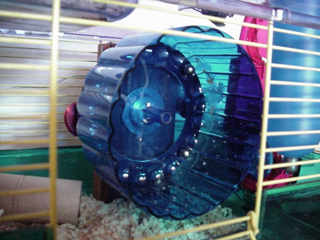 Hamster-power! Literally  electricity-generating hamster