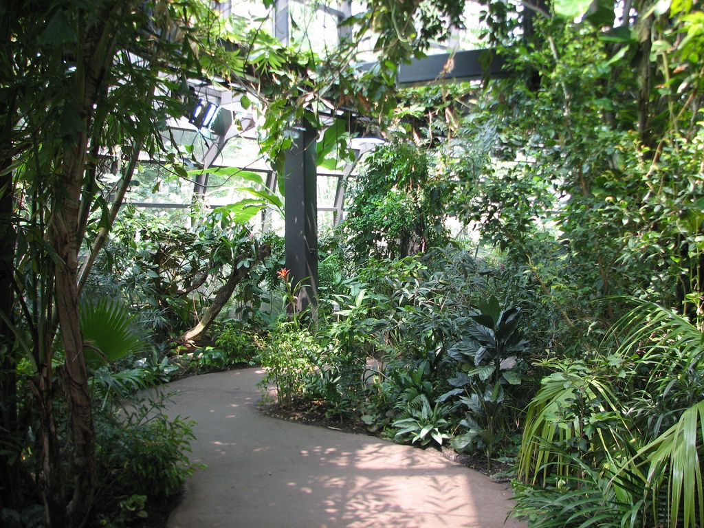 Inside Cleveland Metroparks Zoo Rainforest Cleveland Ohio With