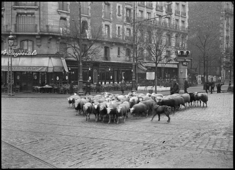 Troupeau de moutons devant une bouche de métro / Flock of sheep in front of a subway entrance, Paris, 1930, André Kertész.