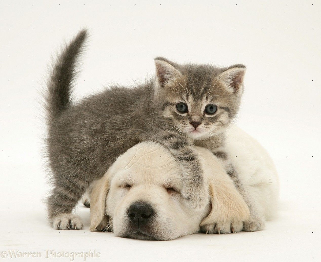 Cute Pictures Of Puppies And Cats