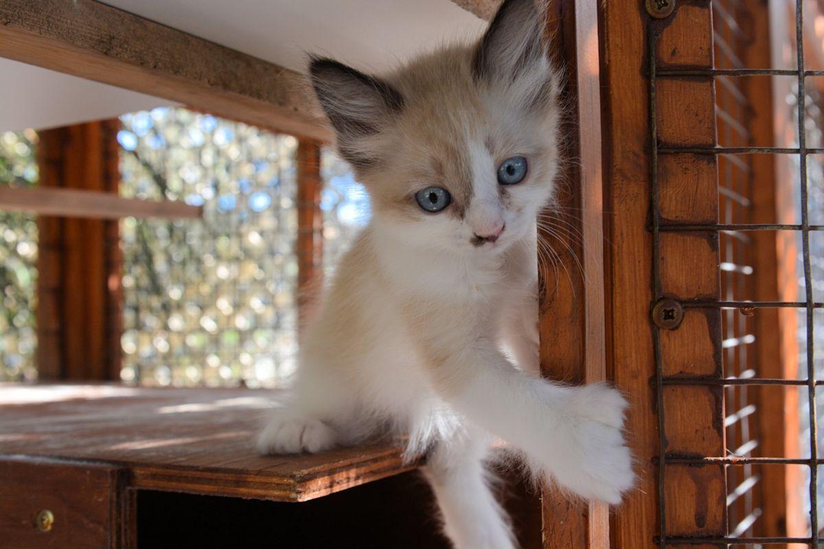 Pin by Michele McKenzie Bobbitt on Manx Cats Manx