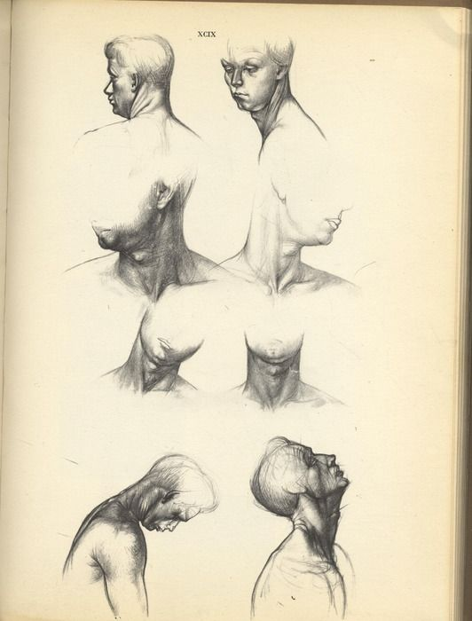 Jeno Barcsay - Anatomy for the Artist - 1958 | Head and neck ...