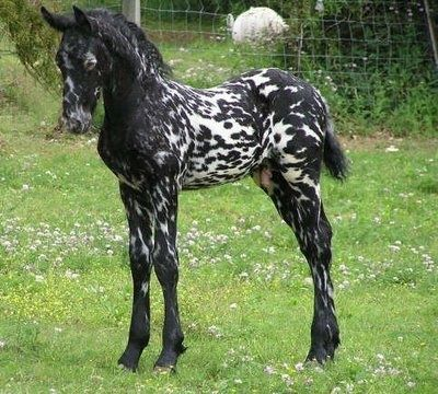 unusual marked horses - Google Search