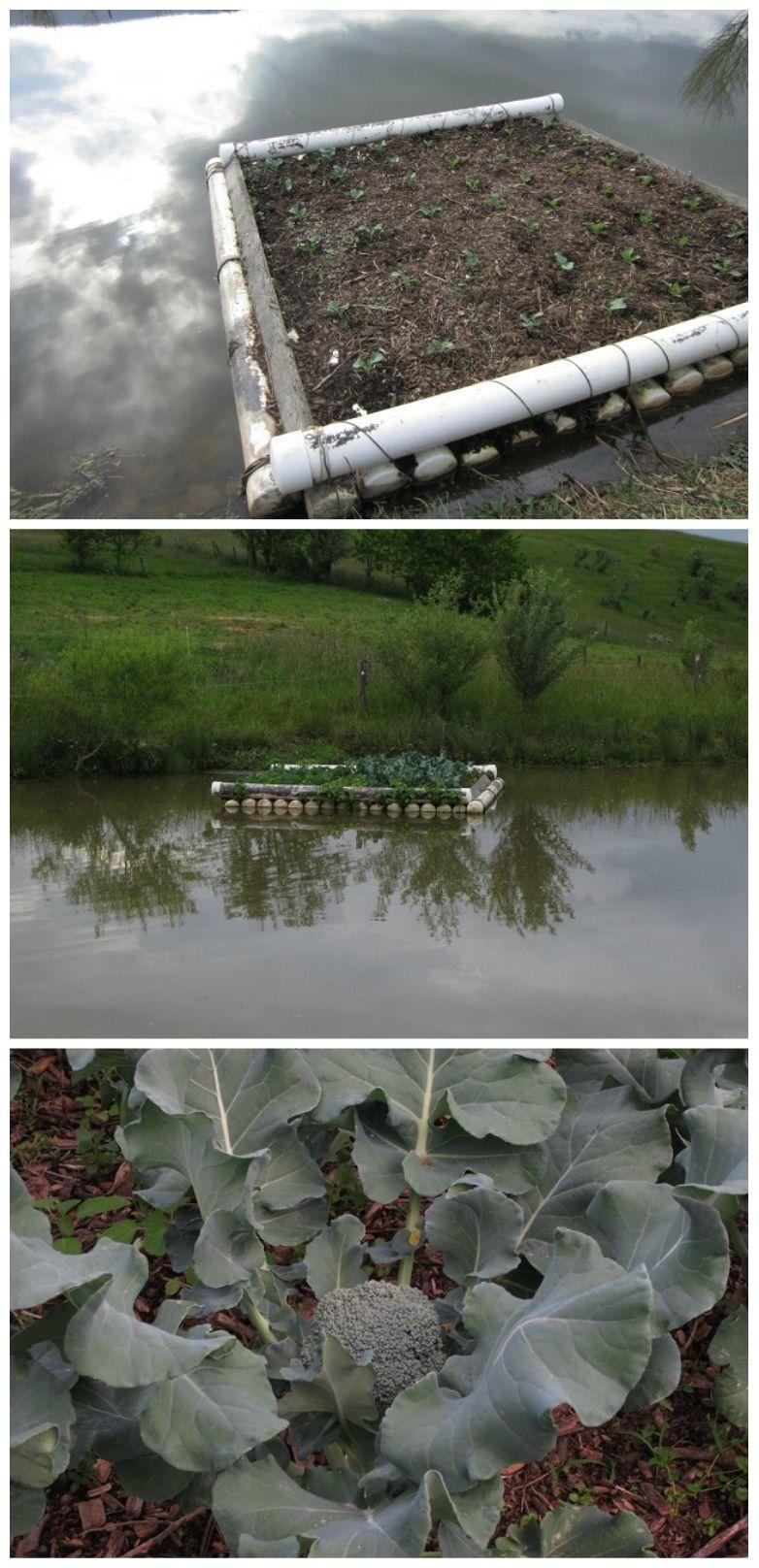 Floating Vegetable Garden Floating Garden Vegtable 400 x 300