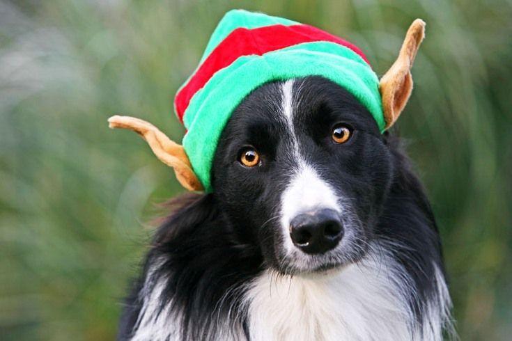 Christmas elf by ~svarci: