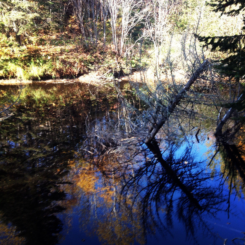 riviere , arbre dans l'eau , reflet !!