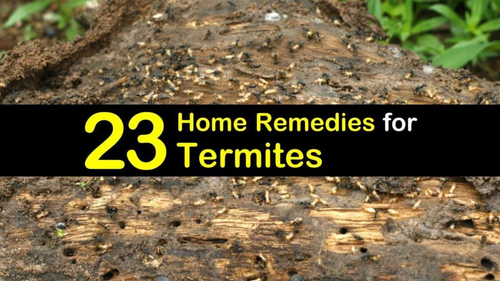 23 Simple Remedies for Termites (With images) Remedies