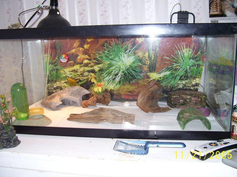 leopard gecko habitat setup leopard gecko habitat pets pinterest leopard gecko habitat. Black Bedroom Furniture Sets. Home Design Ideas