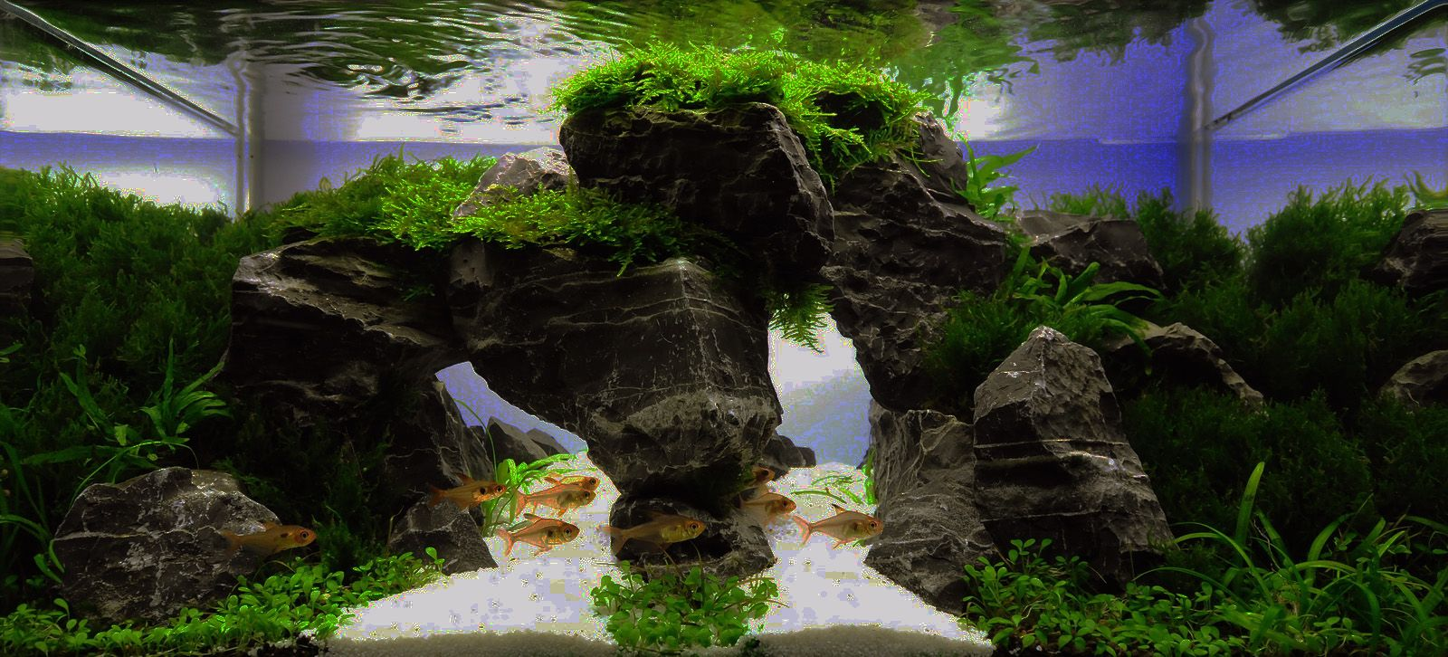 Aquascaping | Concours aquascaping | Planted aquarium ...
