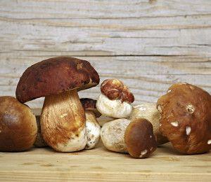 Mushroom Boletus over Wooden Background. Autumn Cep Mushrooms picking.