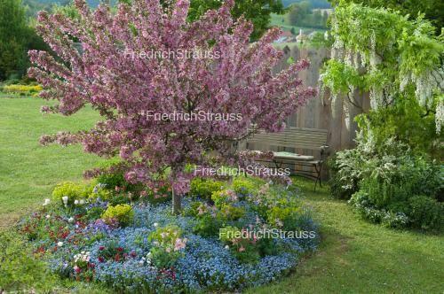 Zierapfel unterpflanzt Vergißmeinnicht Garten Pinterest Gärten